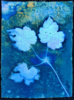 Wet cyanotype, Sue Reno, Image 26
