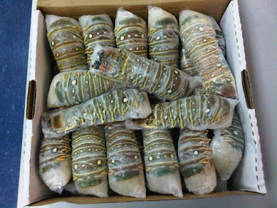 Our Profile : Frozen Lobster Supplier - Wholesale Frozen Lobster Meat - Lobster Benefit