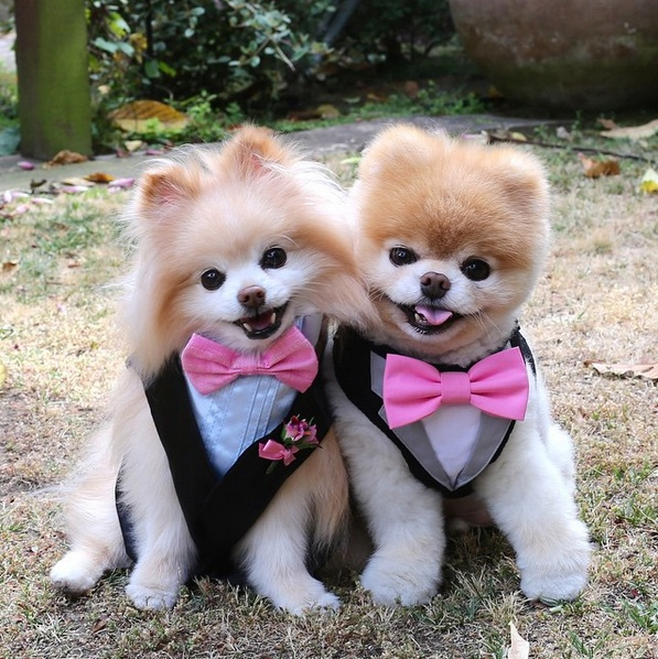 National Dog day 2019 wishes Cute Dog images
