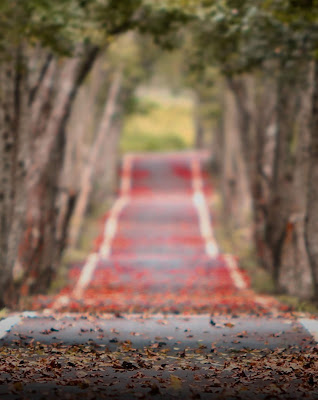 Full Blur Nature Road Background Free Stock Photo