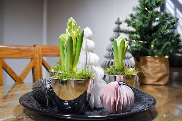 hyasintti joulukoti joulukukka kukka asetelma