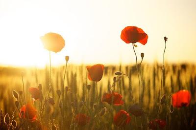 7 Manfaat Matahari bagi Tumbuhan Secara Lebih Detail
