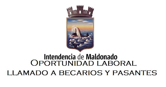 Oportunidad laboral: IDM abrió llamado a becarios y pasantes