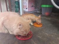 inilah beberapa makanan yang harus dihindari kucing