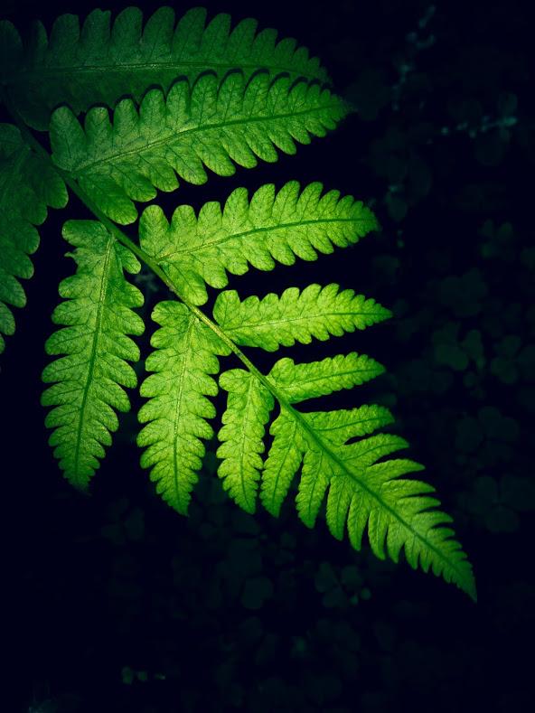 Download Beautiful HD wallpaper of leaves
