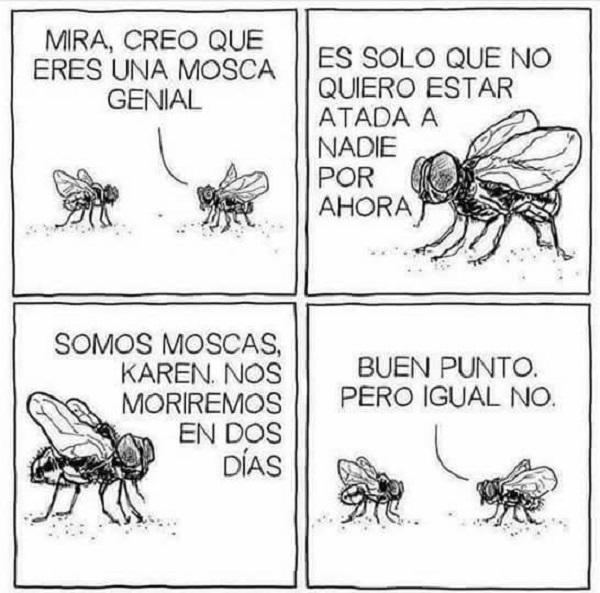 Somos moscas