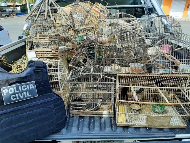 Trinta e sete pássaros silvestres são apreendidos em Anagé