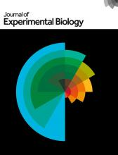 The Journal of Experimental Biology cover