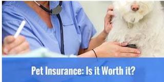 Pet медичного страхування-що це таке і як це вигідно