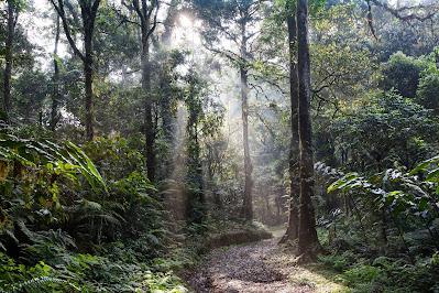 Tropical Rainforests form less than 1% of Australia's landmass
