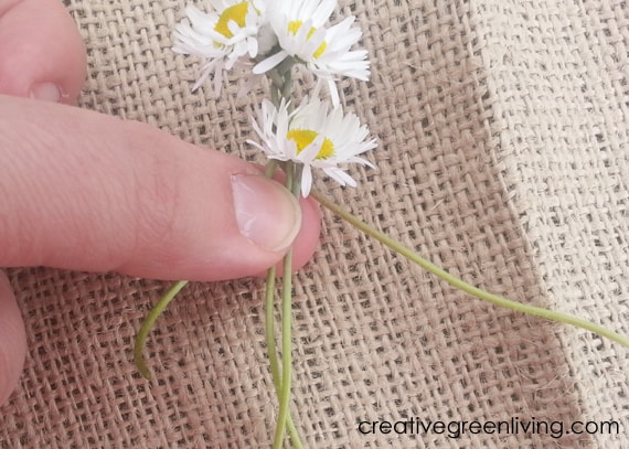 braiding flower stems to make daisy chains