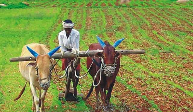 Agriculture In Rajasthan