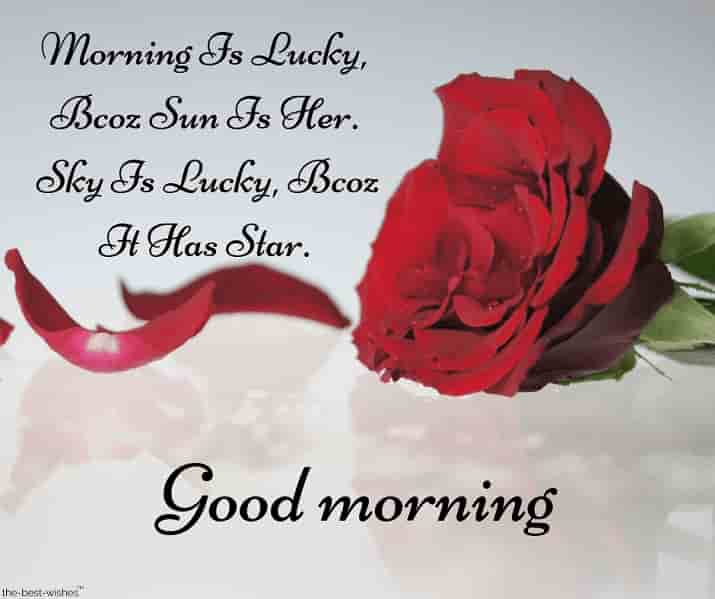 a romantic good morning sms for her with red rose