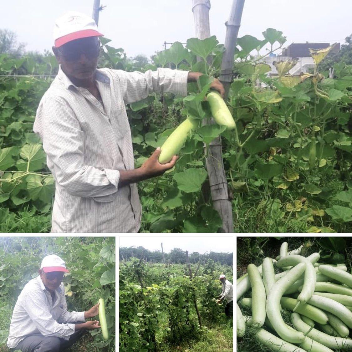 successful vegetable farming by Mahisagar Retierd Teacher