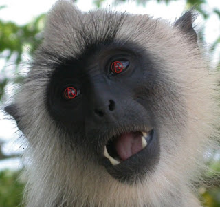 Evil angry atheist monkeys make memes in their efforts to malign God, but they are refuted by thinking people.