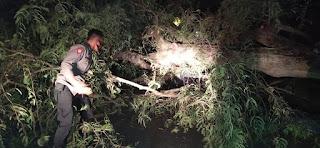Polsek Pammana Polres Wajo Bantu Evakuasi Mobil yang Tertimpah Pohon Tumbang