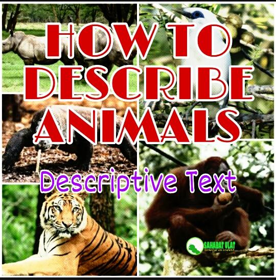 HOW TO DESCRIBE ANIMALS : DESCRIPTIVE TEXT