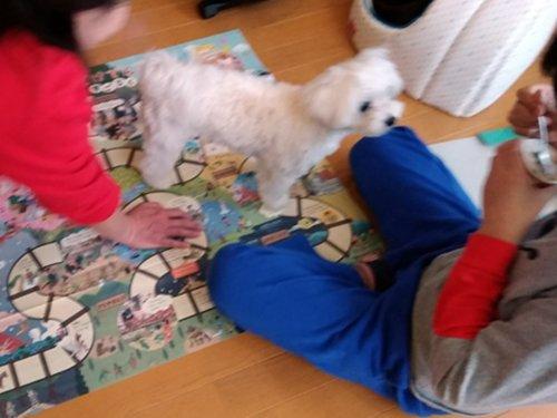 eimy店長と息子は愛犬に邪魔されながら双六。昭和のかおり~(笑)