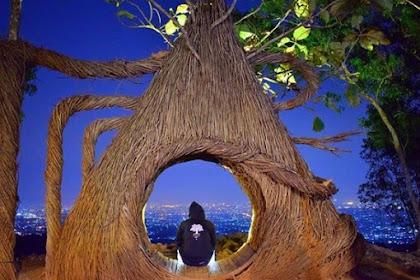 Hutan Pinus Pengger, Spot Foto Instagramable dan Romantis di Yogyakarta