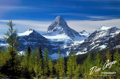 Mount Assiniboine above fall larch near Lake Magog, Mount Assiniboine Provincial Park, British Columbia, Canada.
