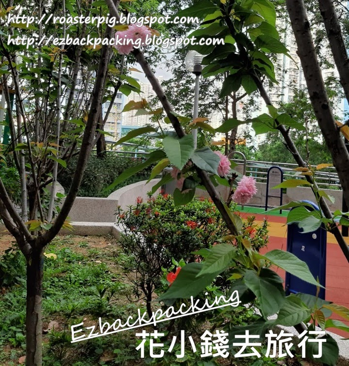 慈雲山櫻花