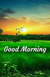 Good morning beautiful pic
