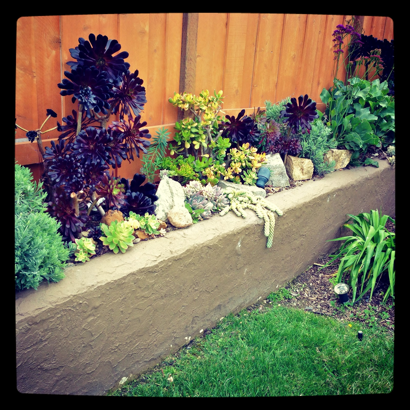 Landscaping Retaining Wall Plants
