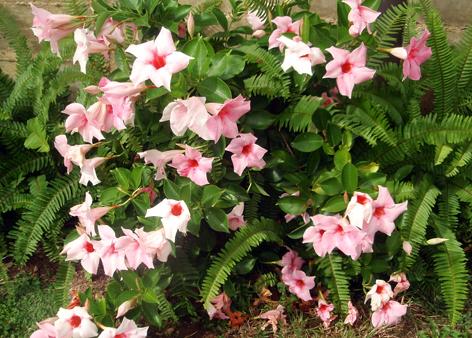 Color en el jard n todo el a o plantas que florecen en for Arboles de hoja perenne para jardin