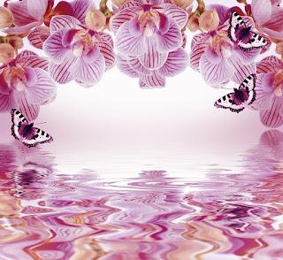 background bunga pink Anggre