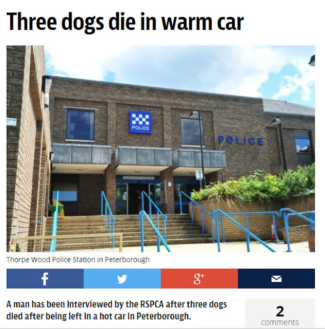 Newspaper headline Three Dogs Die in Warm Car
