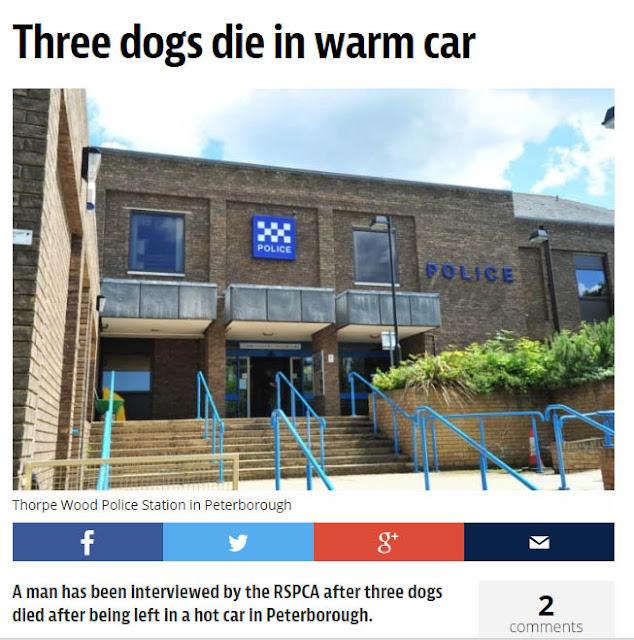Newspaper headline Three Dogs Die in Warm Car