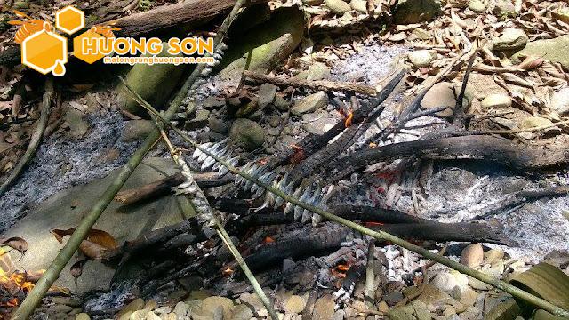 Mật ong rừng Hương Sơn được khai thác như thế nào?