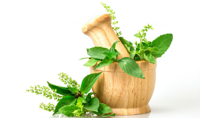 Health Benefits of Tulsi Holy Basil , तुलसी के उपयोग, फायदे, Tulsi ke fayde aur Labh, tulsi for weight loss in hindi, tulsi ka pauda,