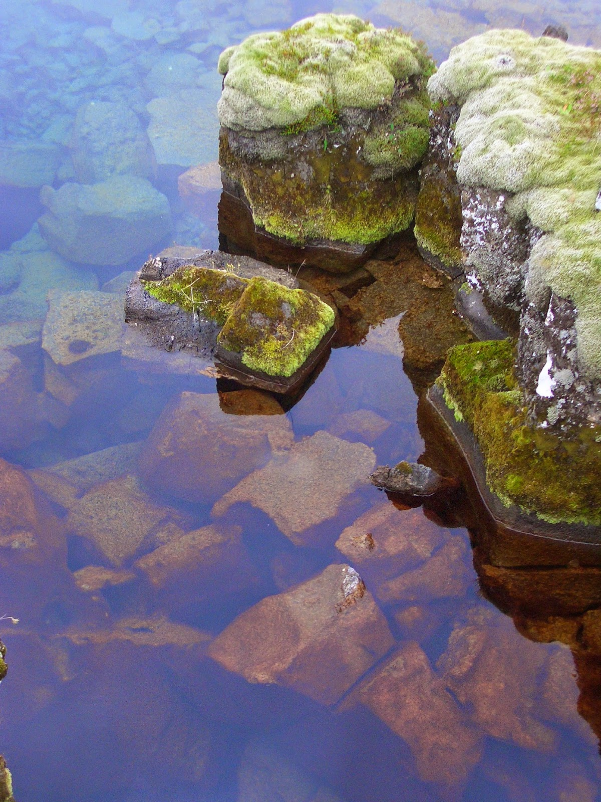Liken y agua cristalina en Pingvellir, Islandia
