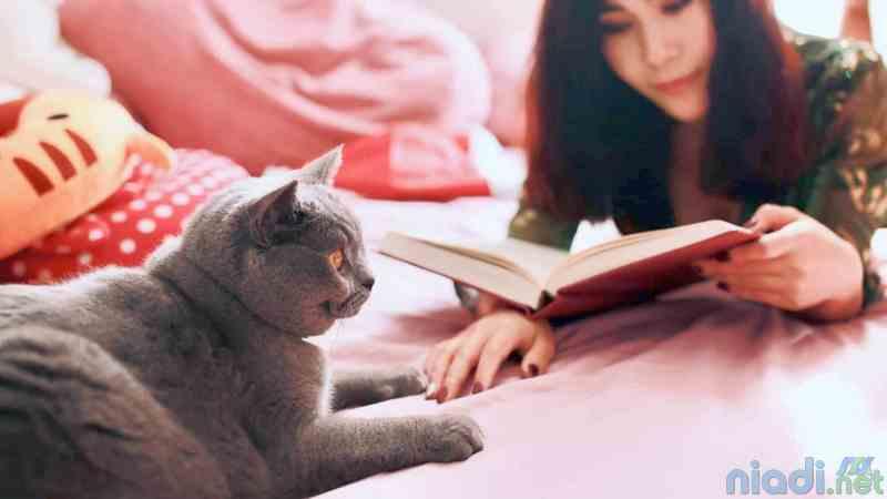 ciri-ciri dan cara merawat kucing sakit perut