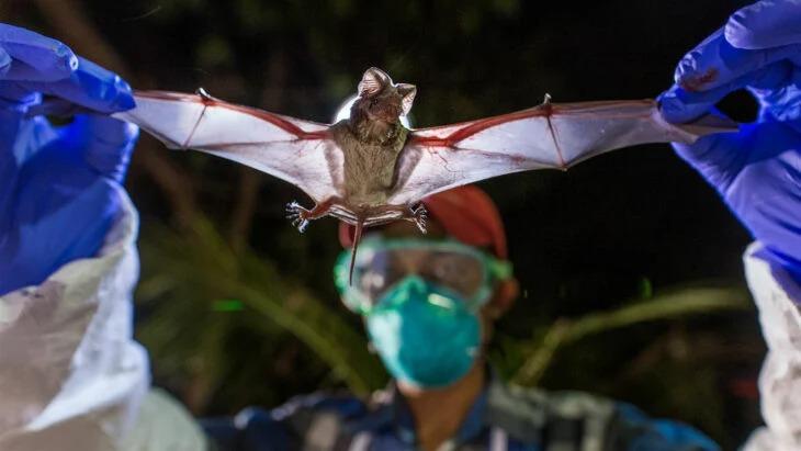 Investigadores chinos toman muestras de murciélagos y descubren que son portadores de otros virus parecidos al covid-19