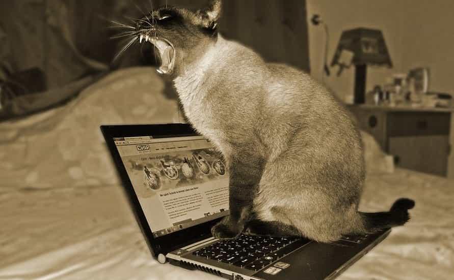 Bermain Laptop