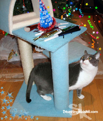 Blue Christmas Surprise From Chewy #ad