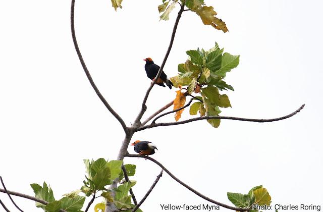 Birds of Raja Ampat