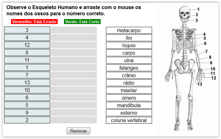 http://www.imagem.eti.br/atividades_educativas/ossos_do_corpo_humano_ciencias_1.html