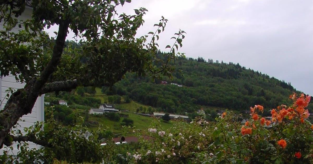Jardineria eladio nonay el silencio y verdor del jard n - Jardineria eladio nonay ...