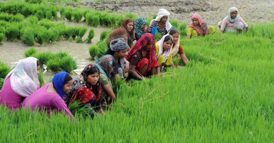 Resultado de imagem para a agricultura foi inventada por uma mulher