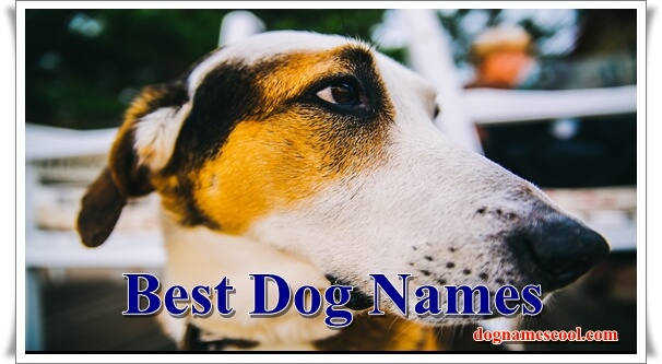 Best dog names