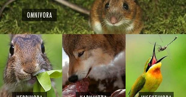 66 Koleksi Gambar Binatang Karnivora Dan Makanannya HD