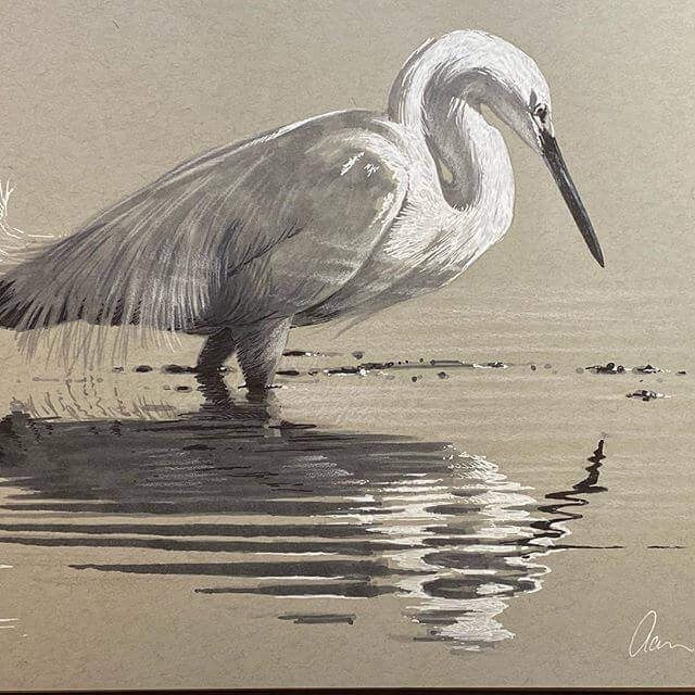 10-Snowy-Egret-reflection-Aaron-Blaise-www-designstack-co