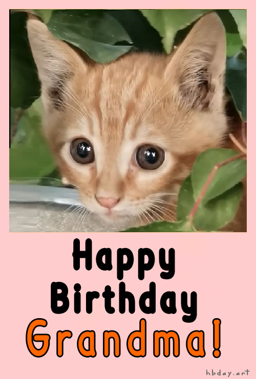 Birthday wishes card to grandmother with cat picture