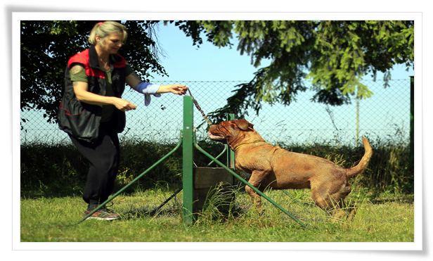 dog training methods positive reinforcement