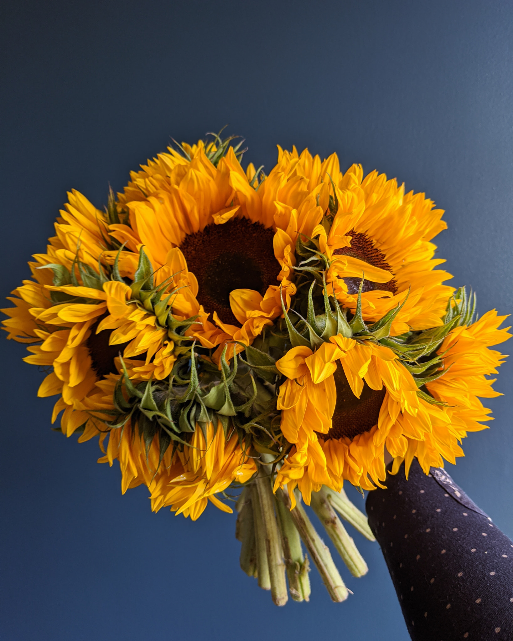 arena flowers subscription review sunflowers liquid grain