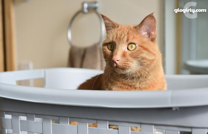 glogirly laundry fashion and cats