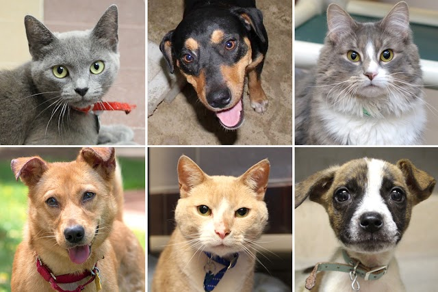 15 lovable pets up for adoption this weekend